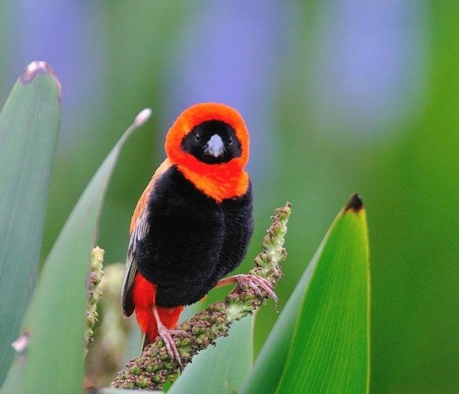 imagenes fotografias pajaros aves 11
