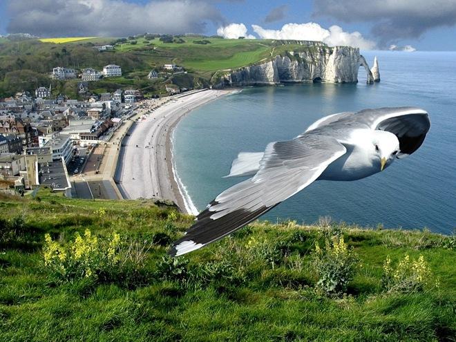 imagenes fotografias pajaros aves 13