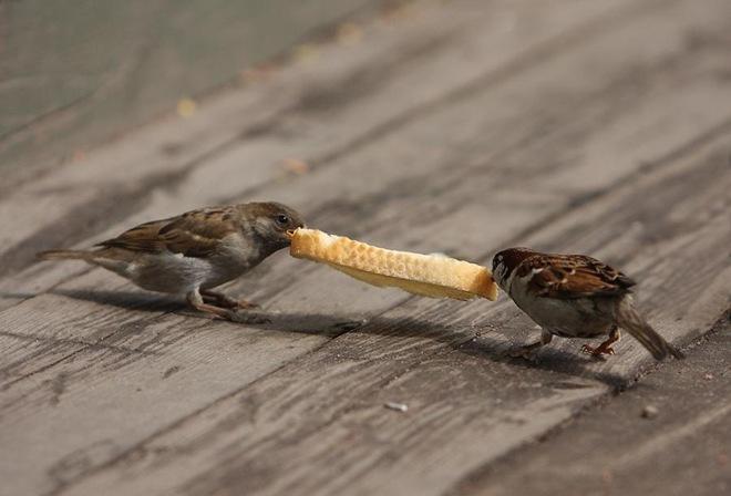 imagenes fotografias pajaros aves 14