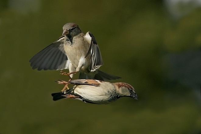 imagenes fotografias pajaros aves 16