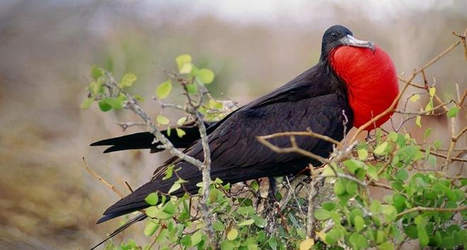 imagenes fotografias pajaros aves 20