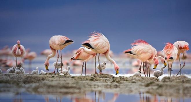 imagenes fotografias pajaros aves 21