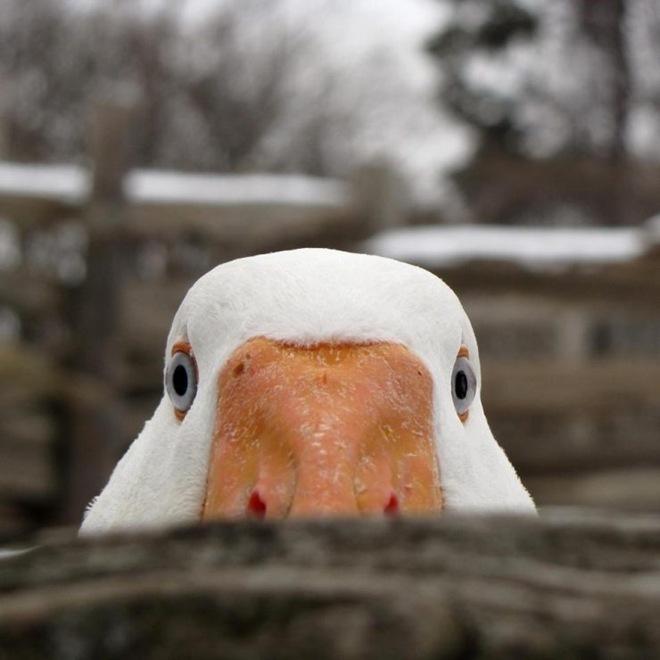 imagenes fotografias pajaros aves 22