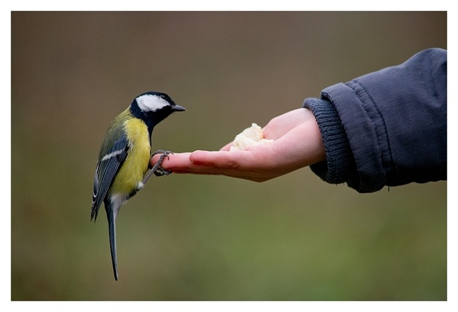 imagenes fotografias pajaros aves 23