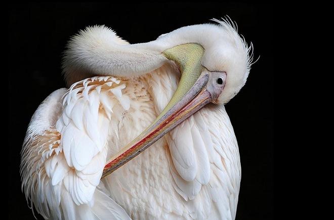 imagenes fotografias pajaros aves 29