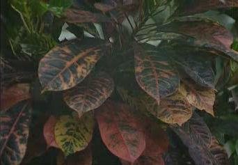 jardines colgantes babilonia maravillas 7 siete 09