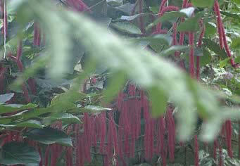 jardines colgantes babilonia maravillas 7 siete 10