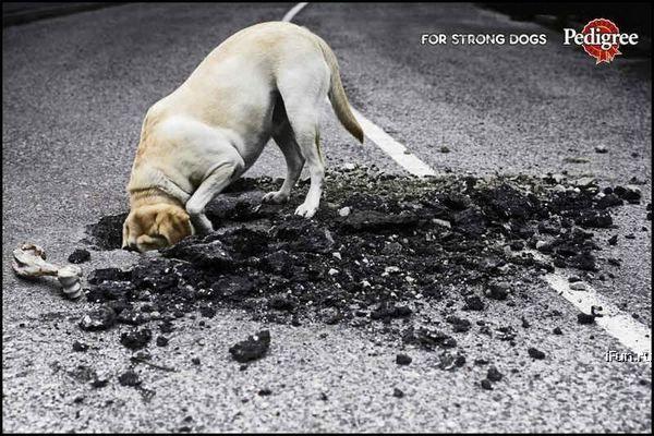 anuncio ingeniosos pedigree perros fuertes