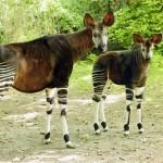 Récords y curiosidades de animales salvajes