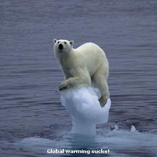 osos polares humor imagenes hielo 03