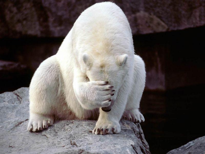 osos polares humor imagenes hielo 07
