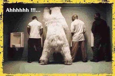 osos polares humor imagenes hielo 15