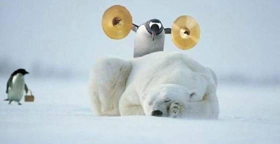 osos polares humor imagenes hielo 19