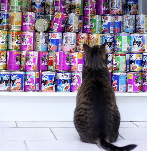 animales risa gato botes comida