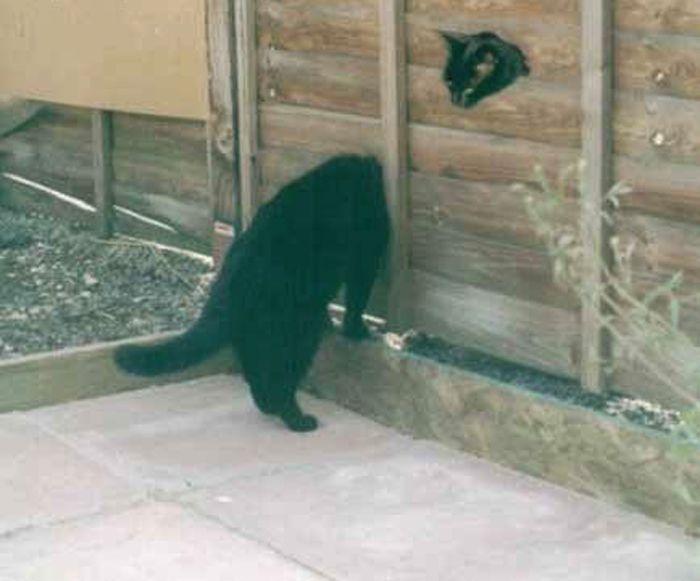 animales risa gato cabeza cuello largo