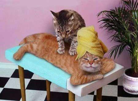 animales risa gatos masaje