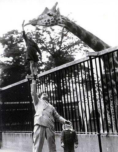 animales risa jirafa zoo