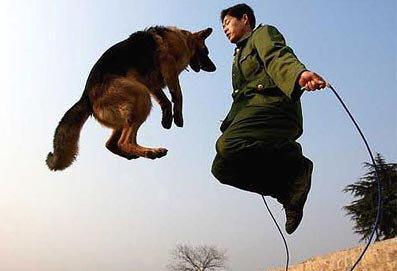 animales risa perro saltando comba