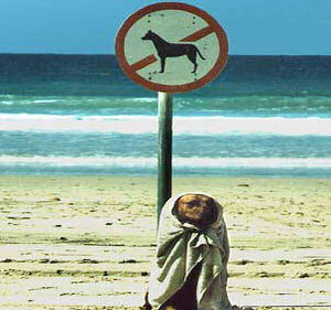 animales risa prohibido perros playa