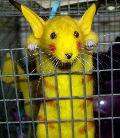 animales risa roedor pikachu