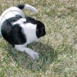 ¿Por qué los perros dan vueltas sobre sí mismos antes de irse a dormir?