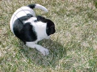 perro dando vueltas circulos