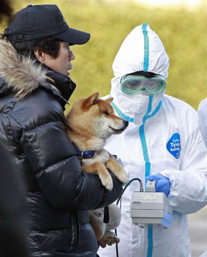 tsunami japon 11 marzo 2011 Koriyama fukushima radioactividad