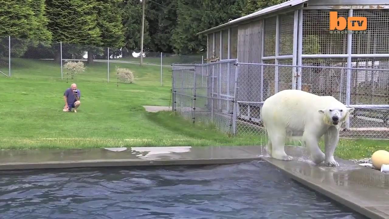 Mark Dumas Agee oso polar hombre 2