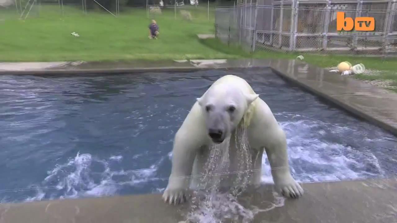 Mark Dumas Agee oso polar hombre 3