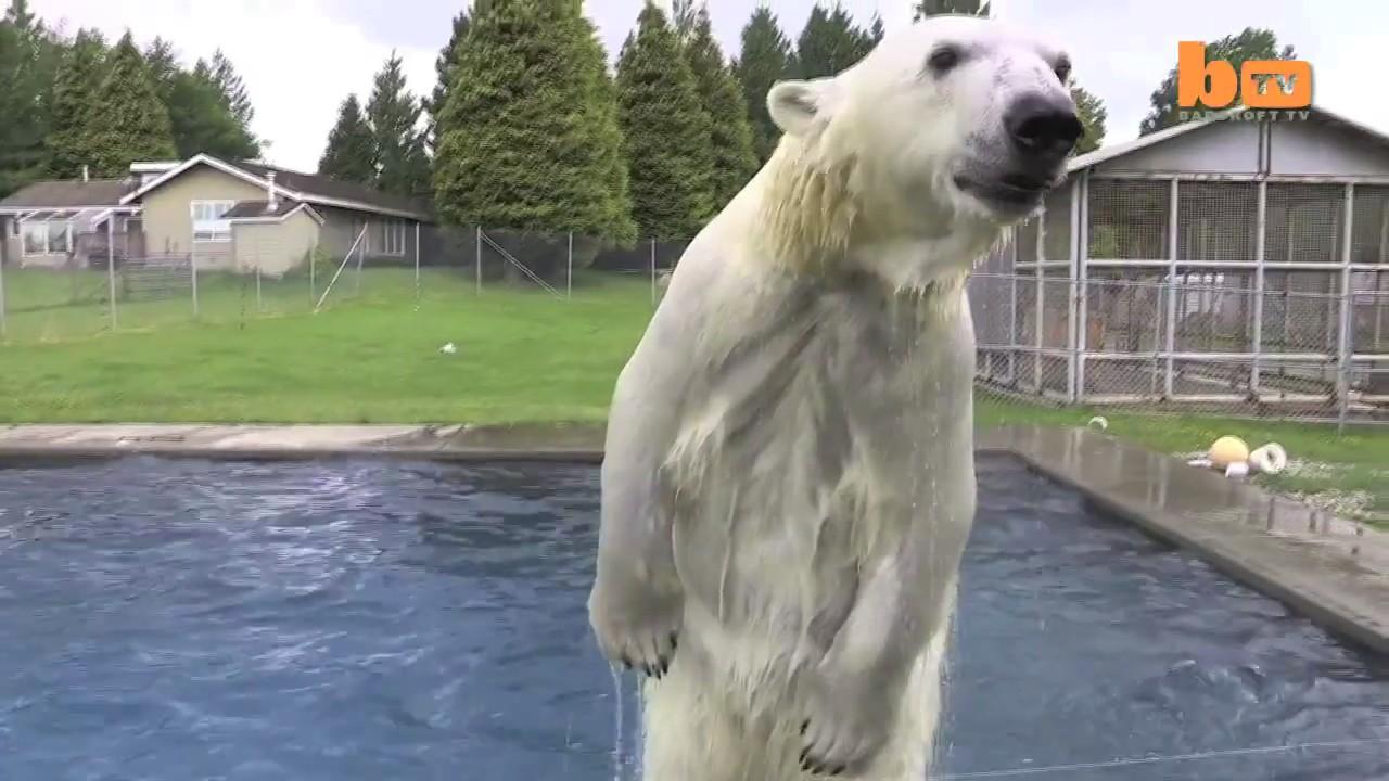 Mark Dumas Agee oso polar hombre 4