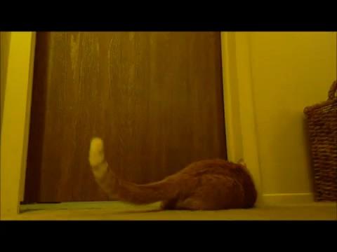 gato despertador 0