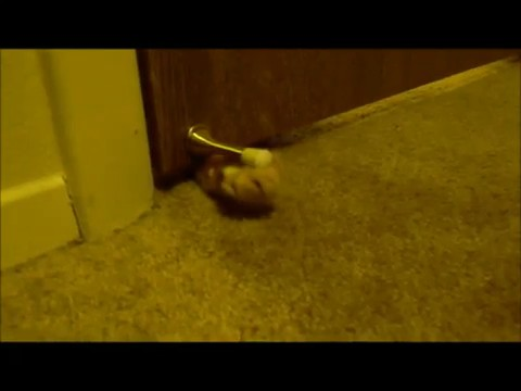 gato despertador 1
