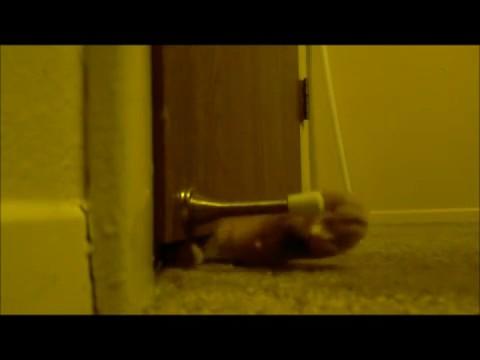 gato despertador 2