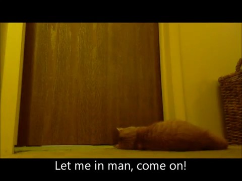 gato despertador 3