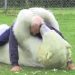 Oso polar amigo de un hombre