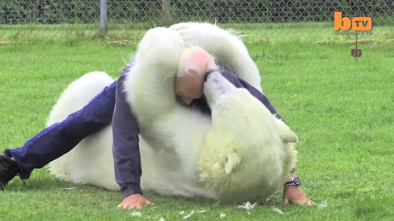 oso polar jugando hombre 1