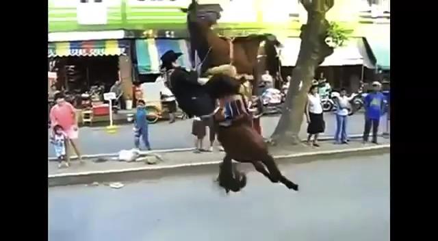 caballo tirando jinete espaldas