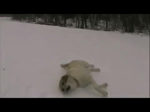perros-nieve-retozando