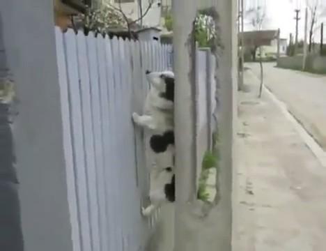 perro subiendo reja