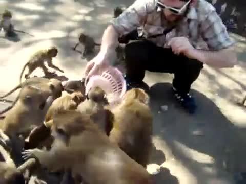 alimentando dando comer macacos