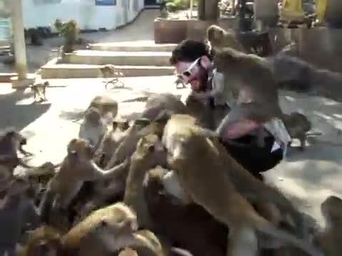 alimentando dando comer monos