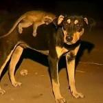 Amor entre perros y monos