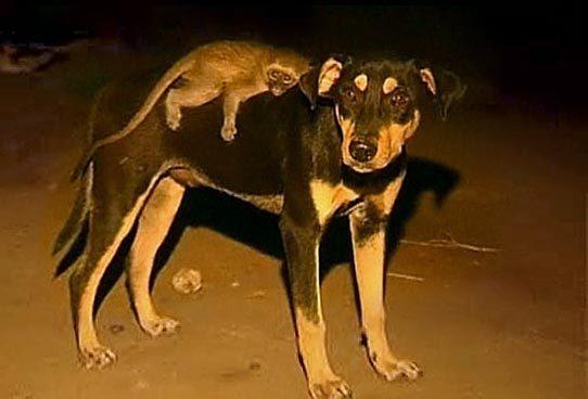 billy kiko amor perro mono 2