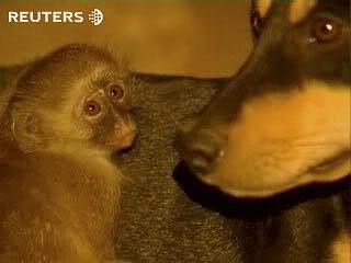 billy kiko amor perro mono 3