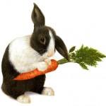 ¿Es verdad que las zanahorias mejoran la vista y evitan que los conejos se queden ciegos?