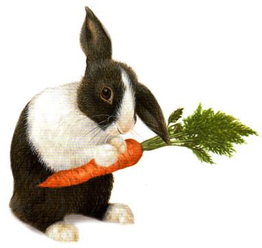 conejo zanahorias