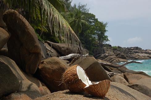 naturaleza bella coco playa