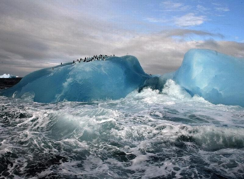 naturaleza bella hielo pinguinos iceberg