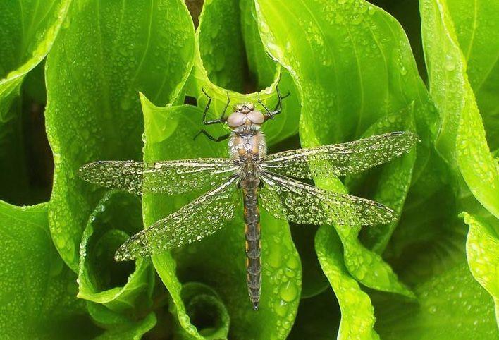 naturaleza bella insecto