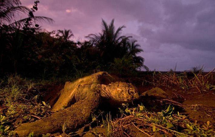 naturaleza bella tortuga